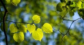 Medicinal Trees and More